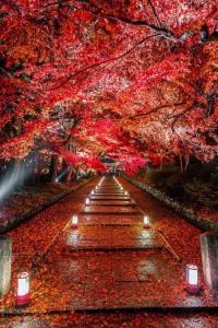 Blossoms by Takahiro Bessho (1)