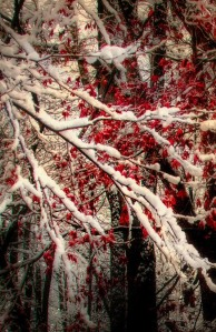 Winter by Victoria Winningham