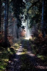 Novemberwoods by Thomas Timmermann