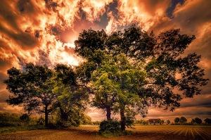 trees on field by Stefan Kierek