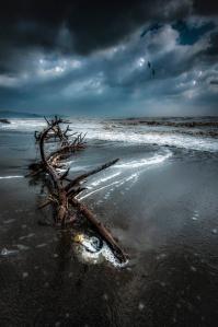 Adrift by Alessandro Butteri