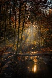 Autumn Jungle by Stefan Bossow (1)