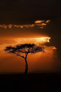 Masai Mara Sunset by Ignacio Palacios