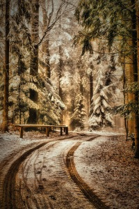 Forest road by Andy
