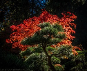 Japanese gardens in Portland from Tim Lyden