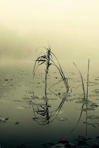 Reflections from Ho Sukardi