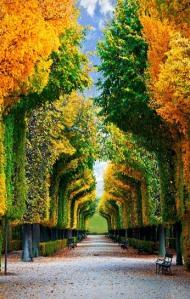 Tree Tunnel, Schonbrunn Gardens, Vienna