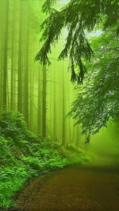 Forest from Renato Silva Abranches