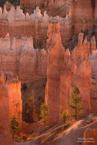 Bryce Canyon by Michael Russell