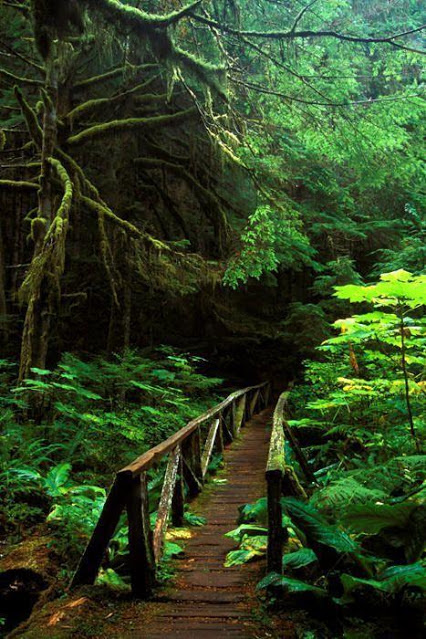 Forest Bridge, Mt. Rainier