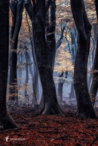 Latern of Leaves par Lars van de Goor (1)