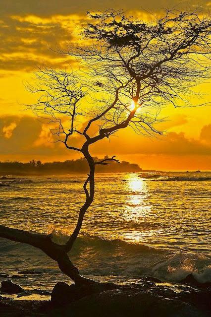 Hawaii from K. JIRA.jpg