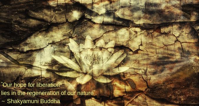 lotus-by-heiko-dhrling