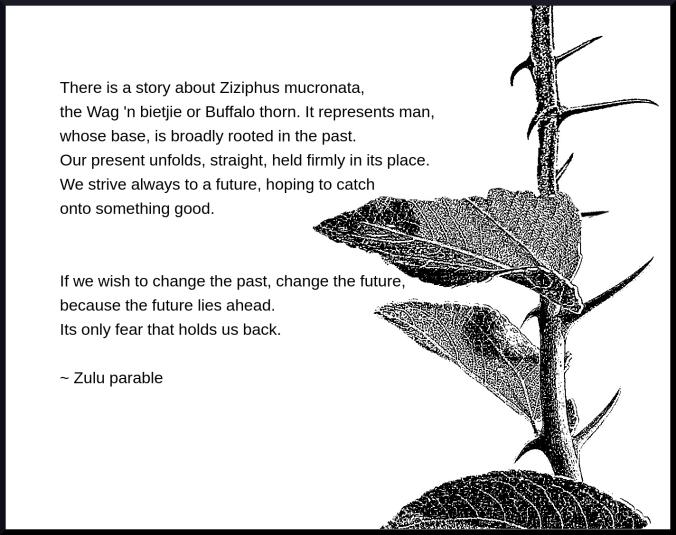 Buffalo thorn (1)