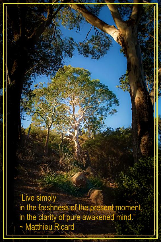 Eucalyptus forrest from Laszlo Baranyai