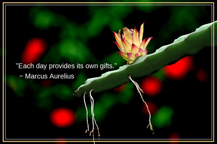 Dragonflower from Ashraf Siddiqui