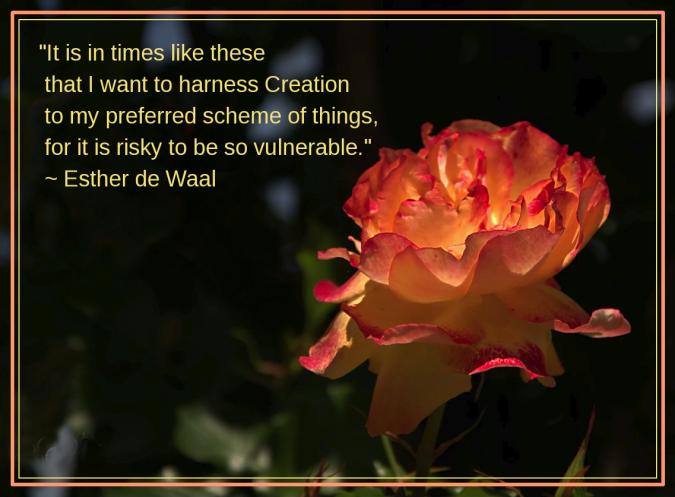 Rose from sonyadora niego